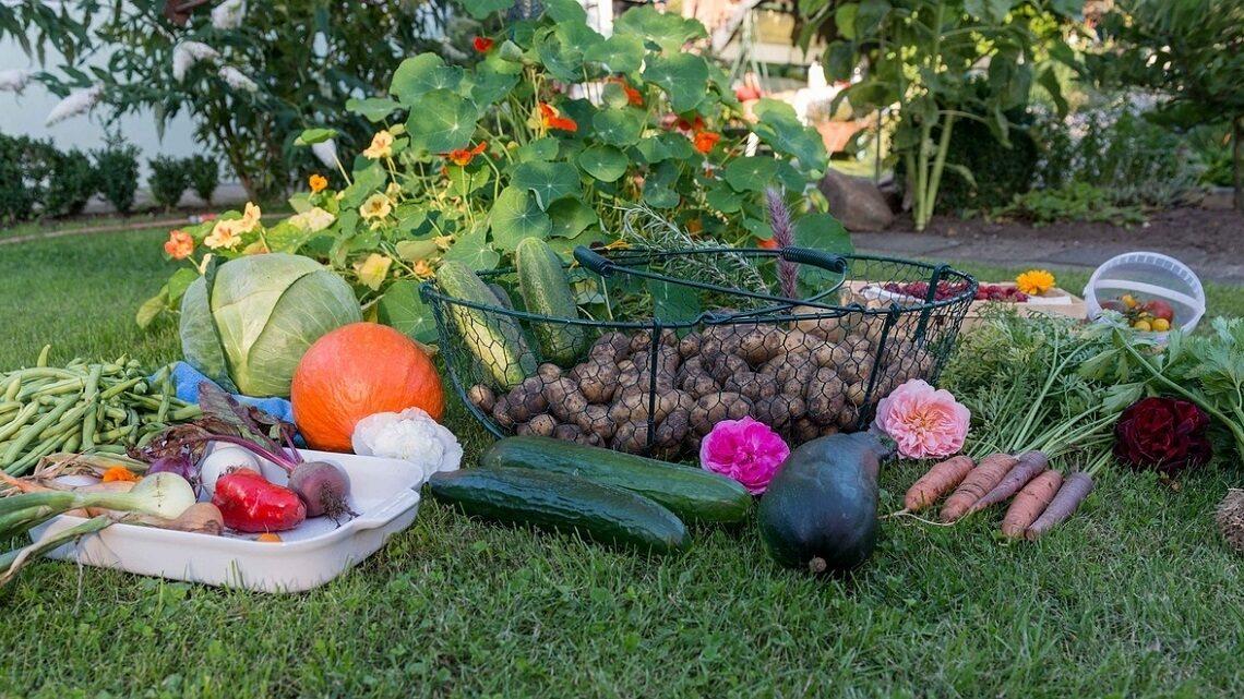 A garden of edible vegetables