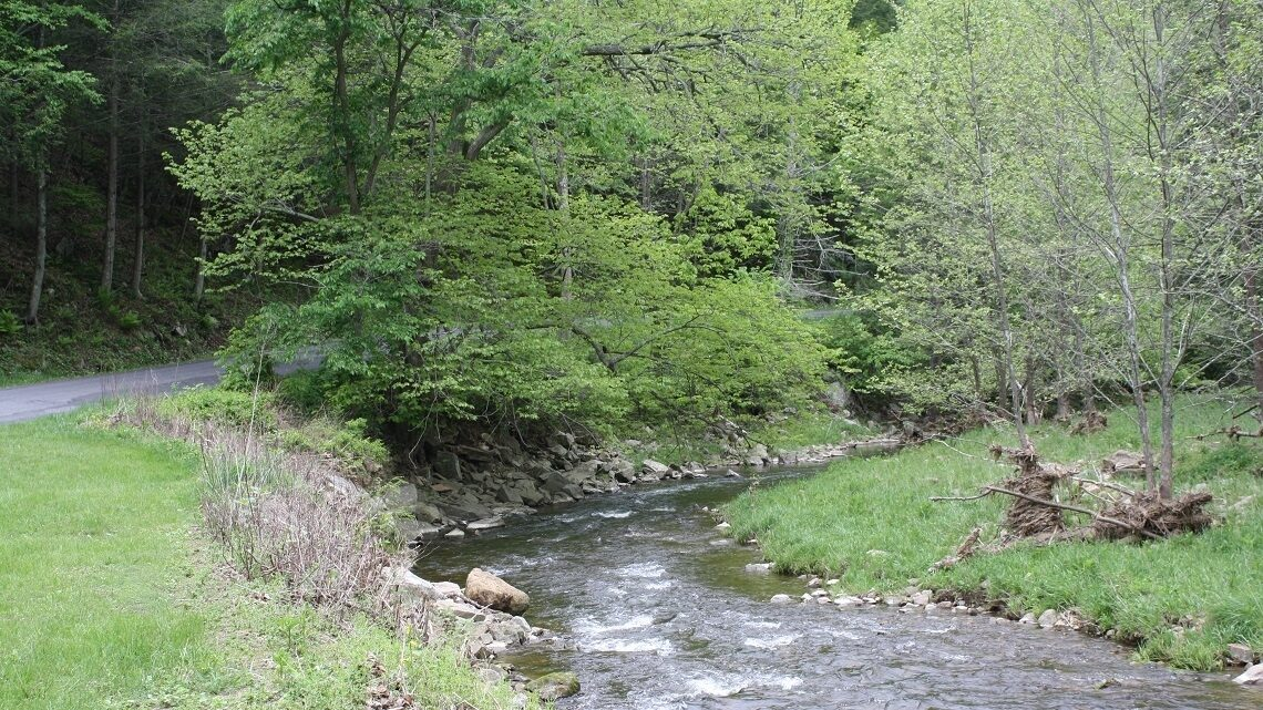 Forest buffer in the Chesapeake Bay Watershed