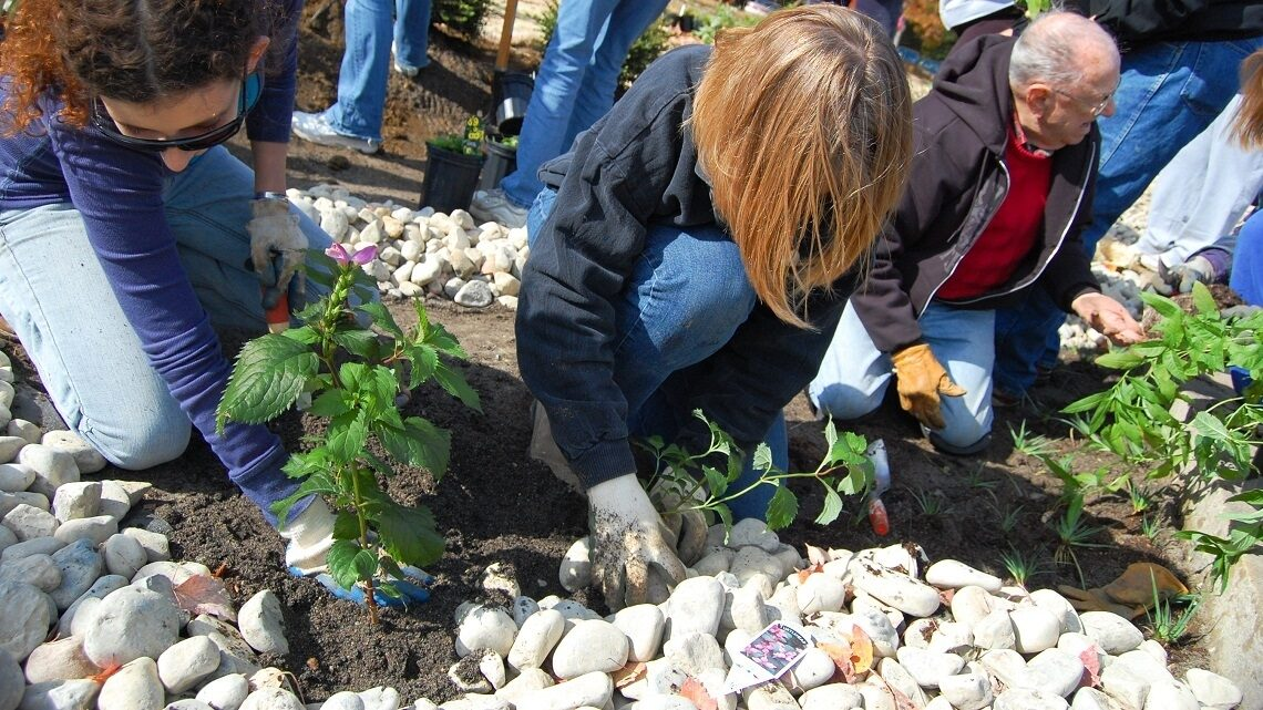 Volunteers plant a newly-constructed rain garden