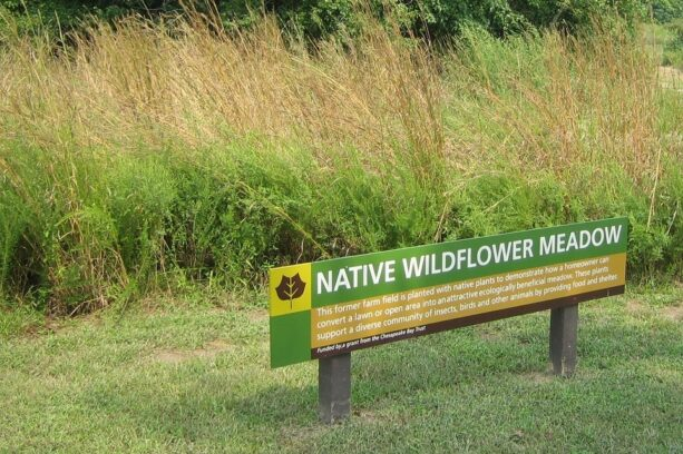 A native wildflower meadow sign at Adkins Arboretum on Maryland's Eastern Shore