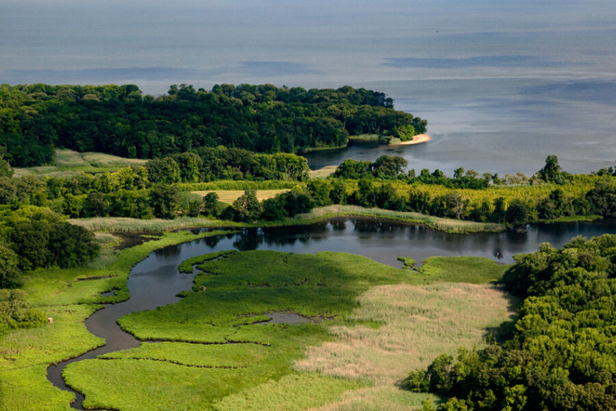 Aerial view of a branching stream meandering through farmland entering the Chesapeake Bay.
